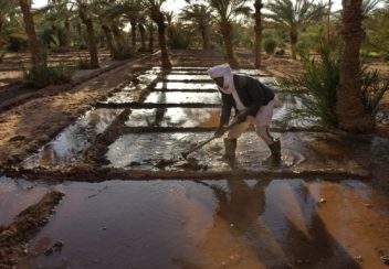 A local farmer carefully opens and closes small channels for the flood of irrigation water through his gardens in Sahel village, near Akabli. The foggara have supplied villages like this for a thousand years with fresh reliable water, but now are falling into disuse as young people are not interested in the difficult and dangerous work of going underground to clean and fix them. The foggara tap into near surface water some six km from the village and transport it with natural gravity flow t